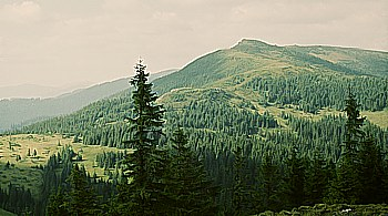 Hnitesa z Bajorówki, fot. A. Wielocha